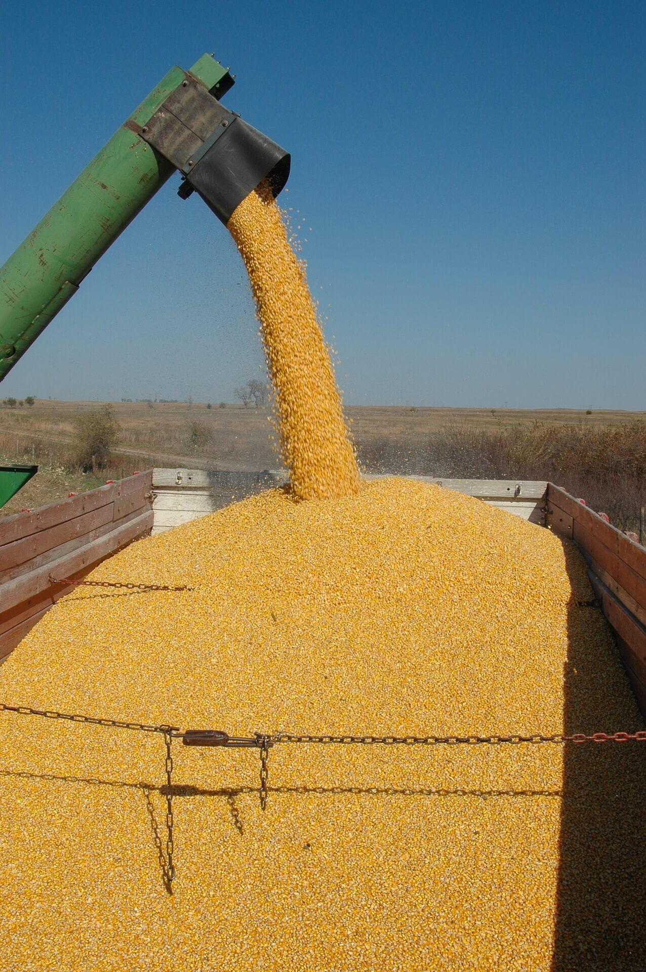 Przemysł spożywczy wobec GMO